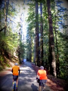 Carl and Drew riding through a redwood grove on Fish Rock Rd. near the Boonville turnoff. Photo: P. Herlihy