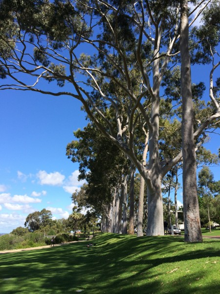 The beautiful and stately Kings Park Botanic Gardens in Perth. photo: Banks