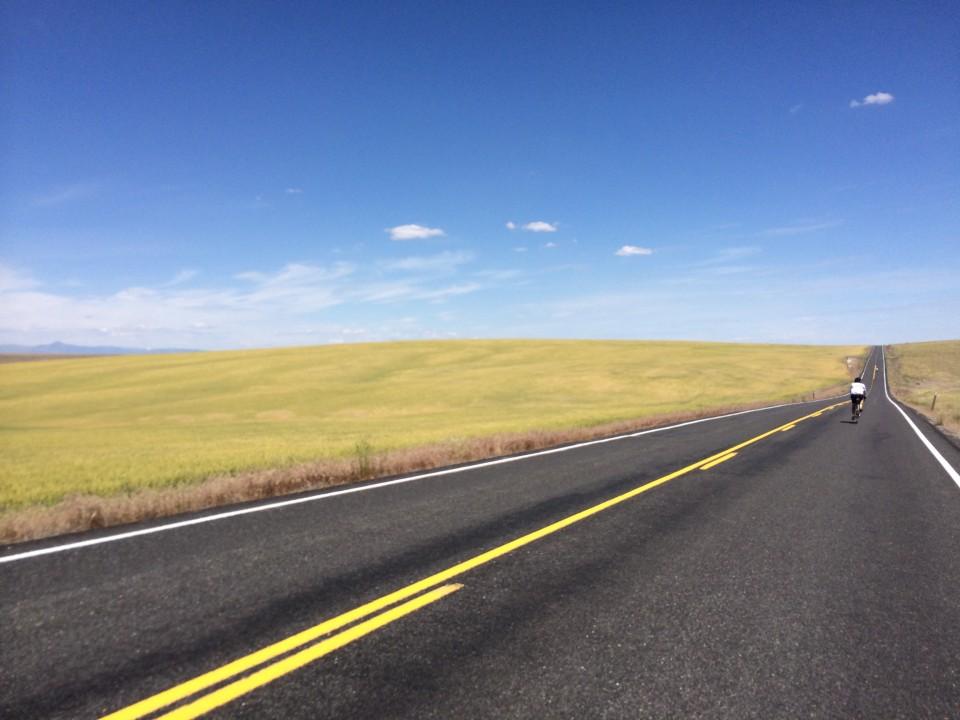Miles of wheatfields. photo: D. Banks