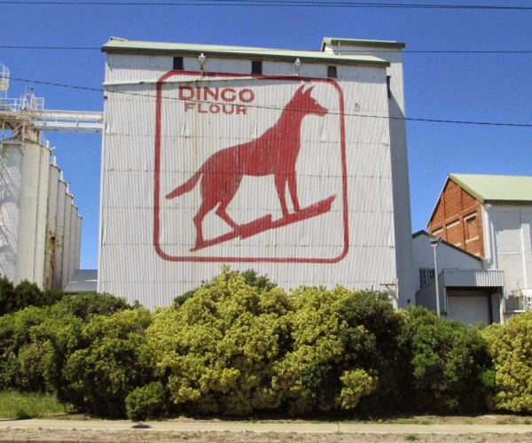 The Dingo ate my Baby! photo: S. Klaassen